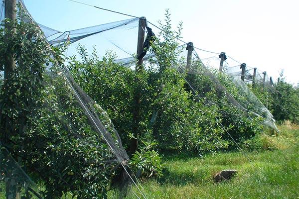funi-cavi-frutteti-06